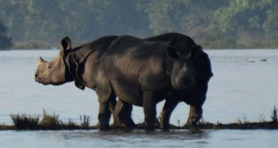 Food, vets at 'highlands' to protect Assam's Kaziranga
