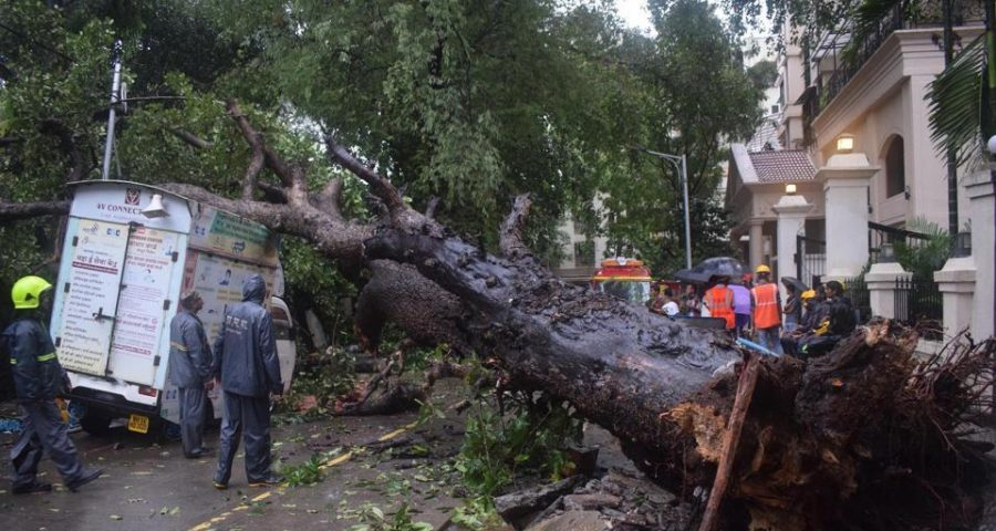 Huge tree falls on parked vehicles